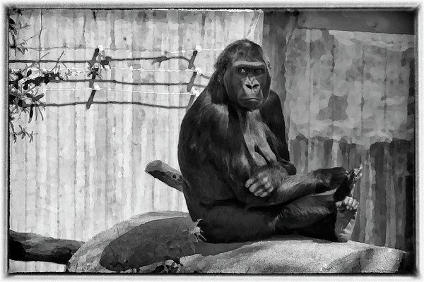 Joan Carroll - Watercolor Gorilla