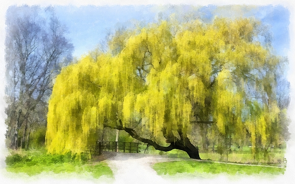 Maciek Froncisz - Weeping Willow Aquarell