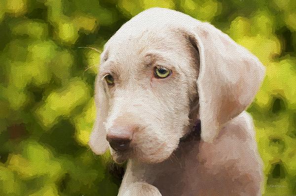 Ericamaxine Price - Weimaraner Puppy - Painting