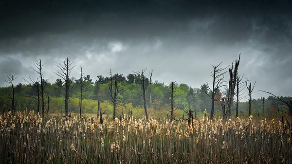 Simmie Reagor - Wetland Snags