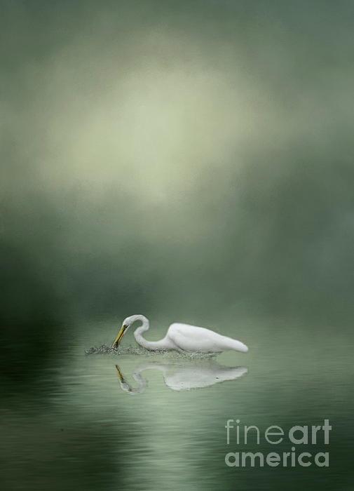 Myrna Bradshaw - White Egret in the Mist
