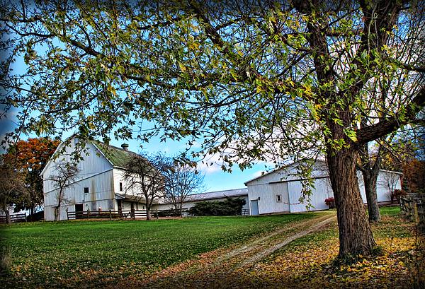 Joan  Minchak - White Farm