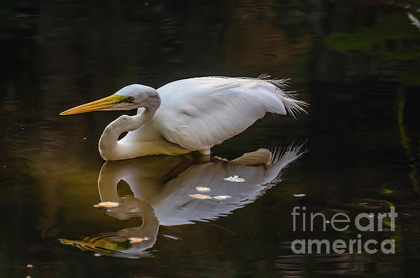 Viktor Birkus - White heron and its reflection in water