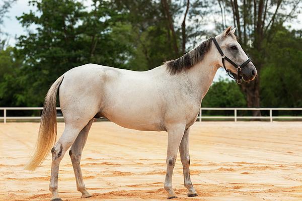 Elena Riim - White Horse