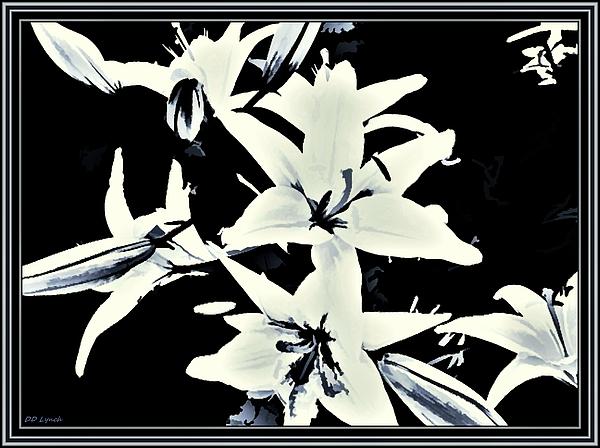 Debra Lynch - White Lilies On Black