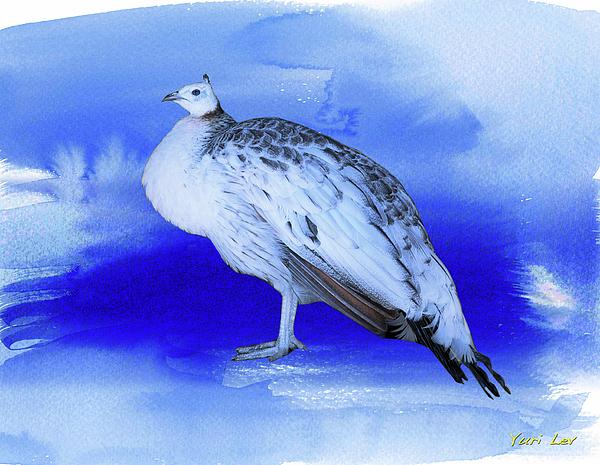 Yuri Lev - White Peacock
