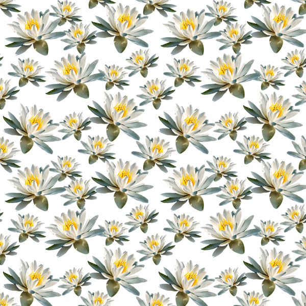 white water lily duvet cover for sale by christina rollo. Black Bedroom Furniture Sets. Home Design Ideas
