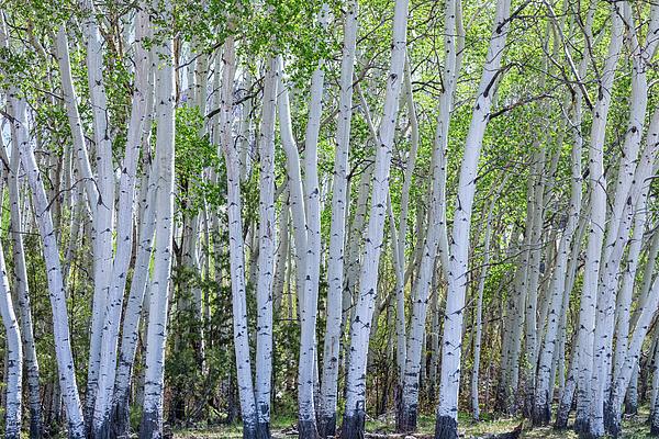 James BO Insogna - White Wilderness