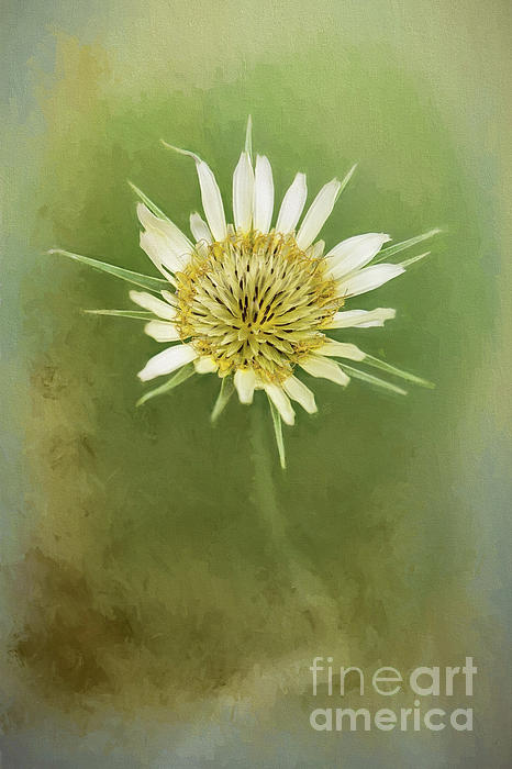 Sharon McConnell - White Wildflower Beauty
