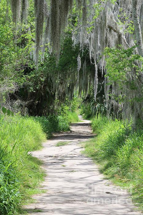 Carol Groenen - Wild Florida Nature Path