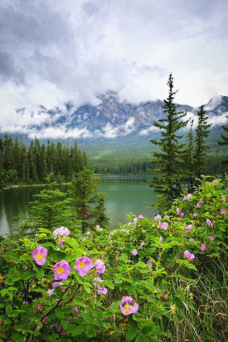 Elena Elisseeva - Wild roses and mountain lake in Jasper National Park