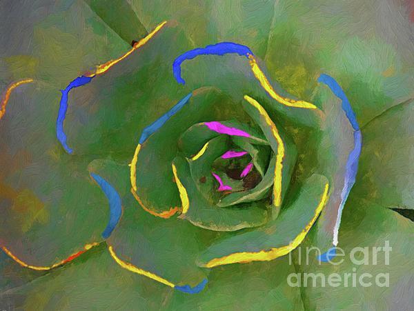 John Kolenberg - Wild Succulent