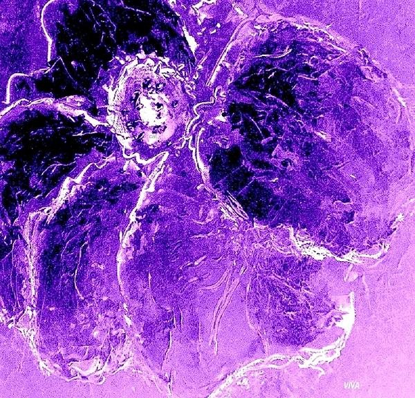 VIVA Anderson - Wild Thing Purple