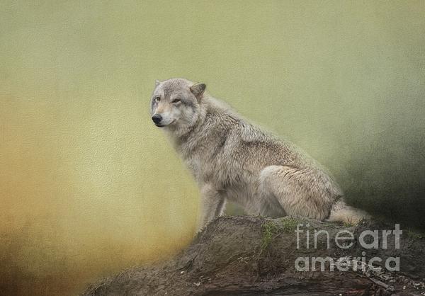 Eva Lechner - Wildlife Alaska