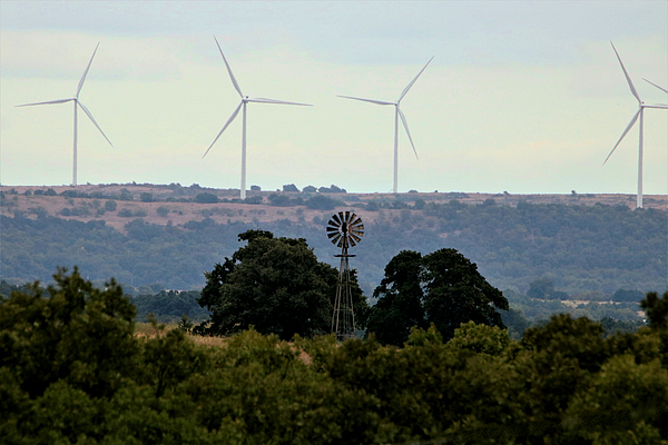 Sheila Brown - Windmills Old and New