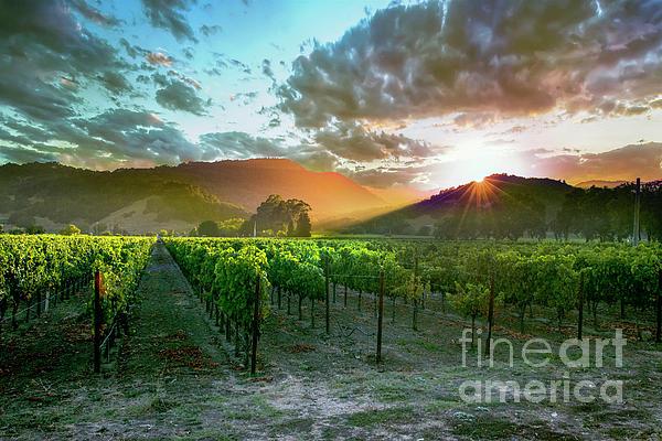 Jon Neidert - Wine Country