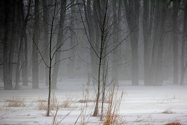 Debbie Oppermann - Winter Fog