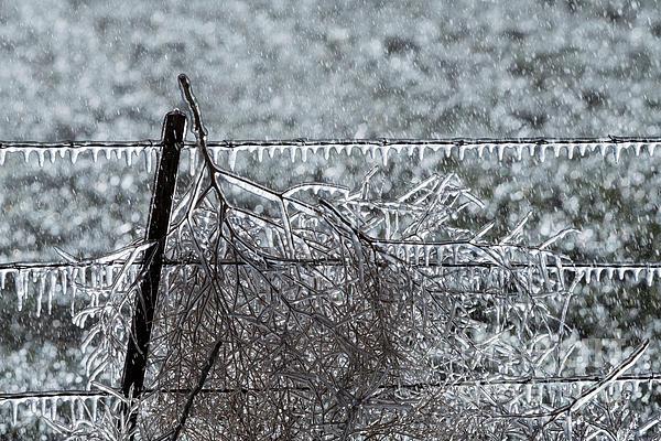 Brenda Tharp - Winter Freeze