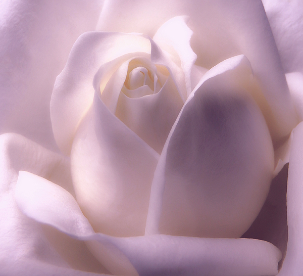 Johanna Hurmerinta - Winter White Rose 2