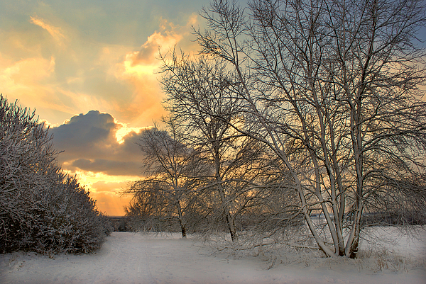 Terence Davis - Winter Wonderland