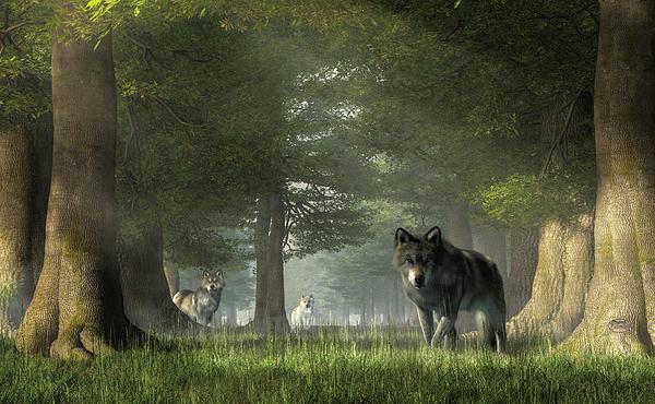Daniel Eskridge - Wolves in the Forest