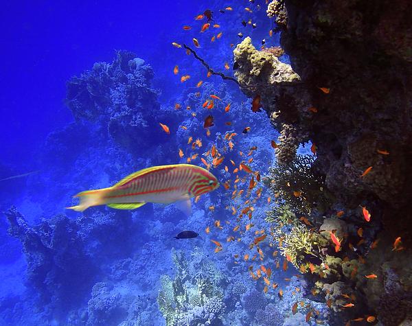 Johanna Hurmerinta - Wonders Of The Red Sea