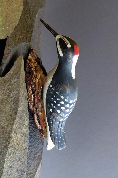 Bruce Peterson - Woodpecker
