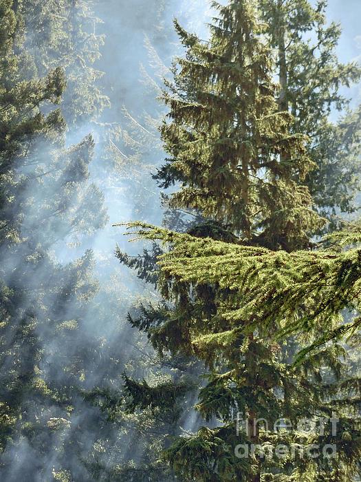 Callan Percy - Woodsmoke Forest