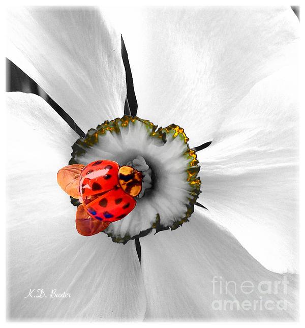 Kimberlee Baxter - Wow Ladybug Is Hot Today