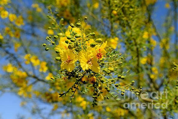 Janet Marie - Yellow Burst Of Spring