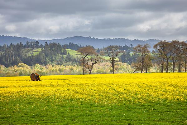 Mark Alder - Yellow Fields Along The Eel River