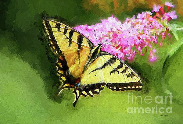 Tina  LeCour - Yellow Swallowtail Butterfly