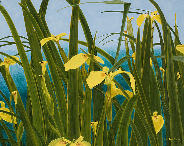 Dorcas Collazo Paden - Yellow Water Lillies