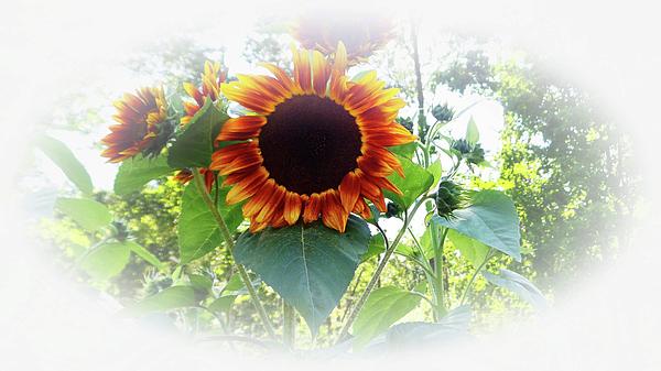 You Are My Sunshine Photograph