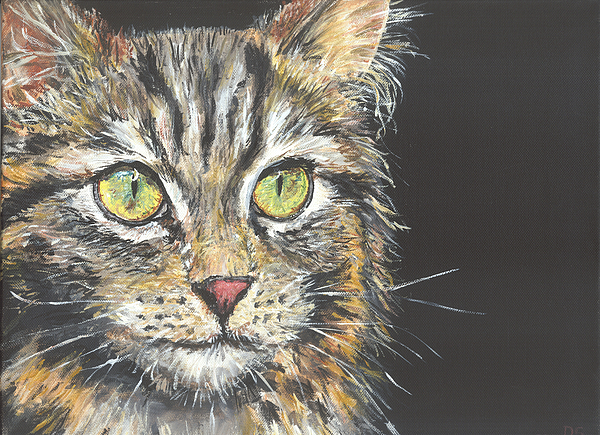 Duncan Sawyer - Young Tabby