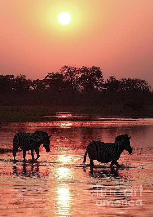 Kay Brewer - Zebra  Sunset 2