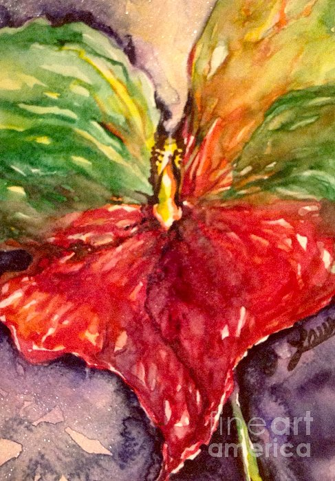 Laurel Adams - Anthurium HeArt Valentine