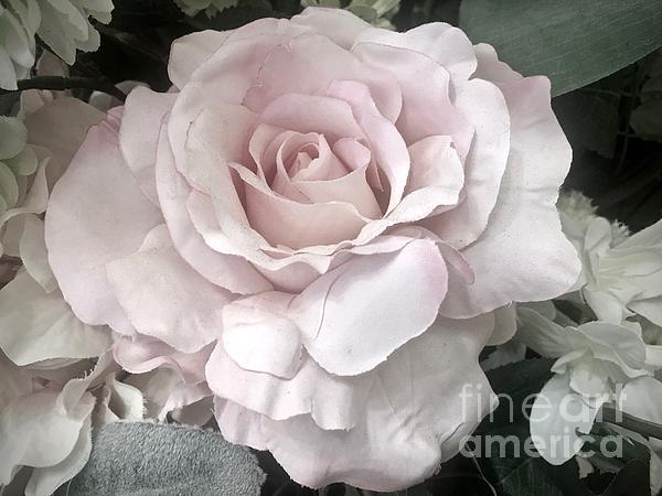 Jeannie Rhode - Soft Pink Rose
