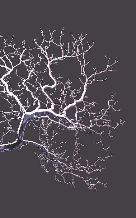 Tree Of Life Mixed Media