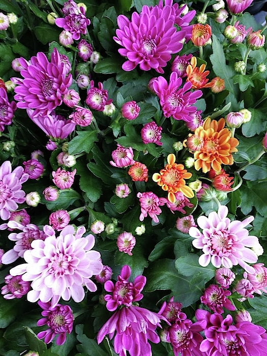 Rosita Larsson - A mix of mums
