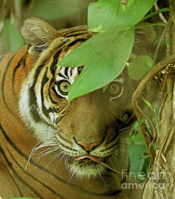 Larry Nieland - Ambush Tiger