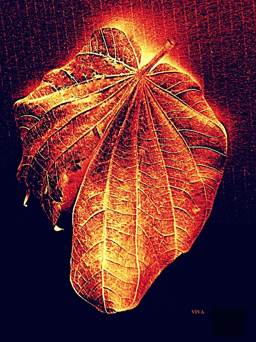 VIVA Anderson - Autumn  Leaf  Aglow