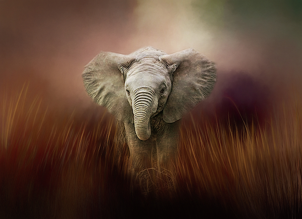 Terry Davis - Baby Elephant Painted