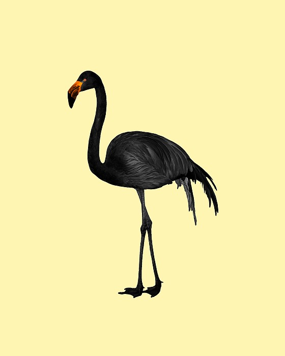 Black Flamingo 2 - Tropical Wall Decor - Flamingo Posters - Exotic Birds - Black, Modern, Minimal Mixed Media