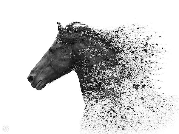 Black Horse No 09 Digital Art