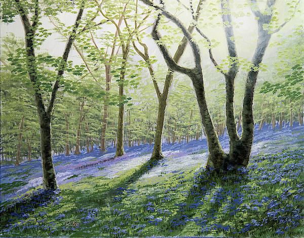 Raymond Ore - Bluebell Wood