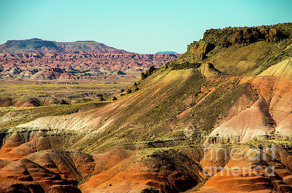 Stephen Whalen - Colorful Petrified Forest
