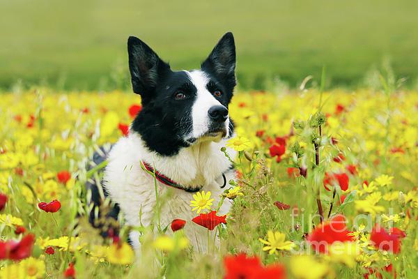 Terri Waters - Dog Sitting Pretty in the Flowers