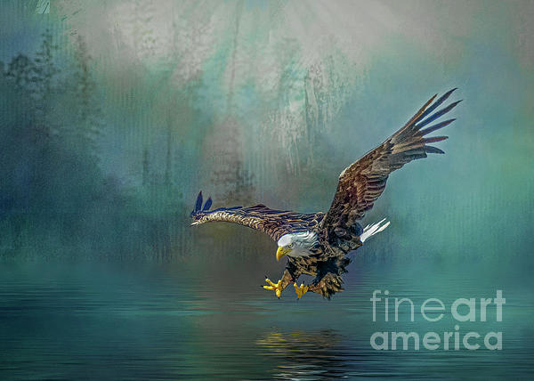 Brian Tarr - Eagle swooping for fish