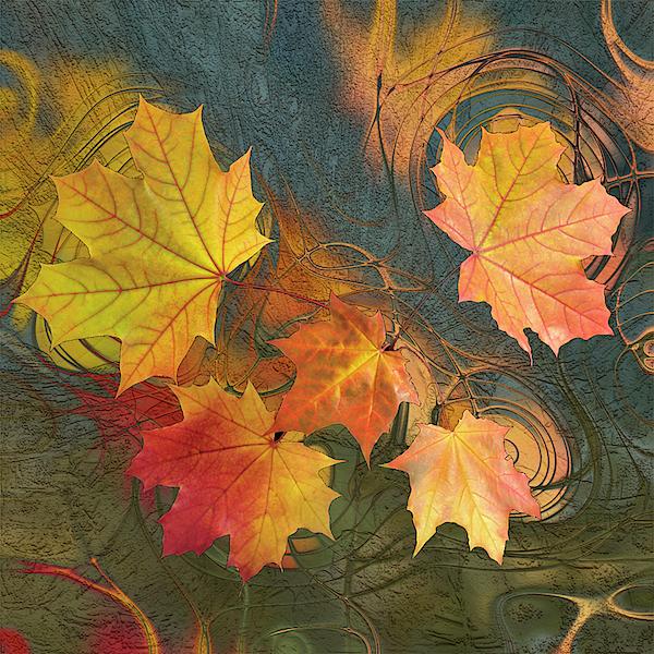 Jack Zulli - Falling Leaves